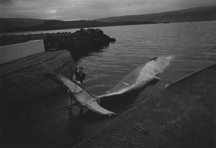 Marie Dann | 'Whale-watching' auf isländisch | 2014 | Baryt Handabzug | © beim Fotografen