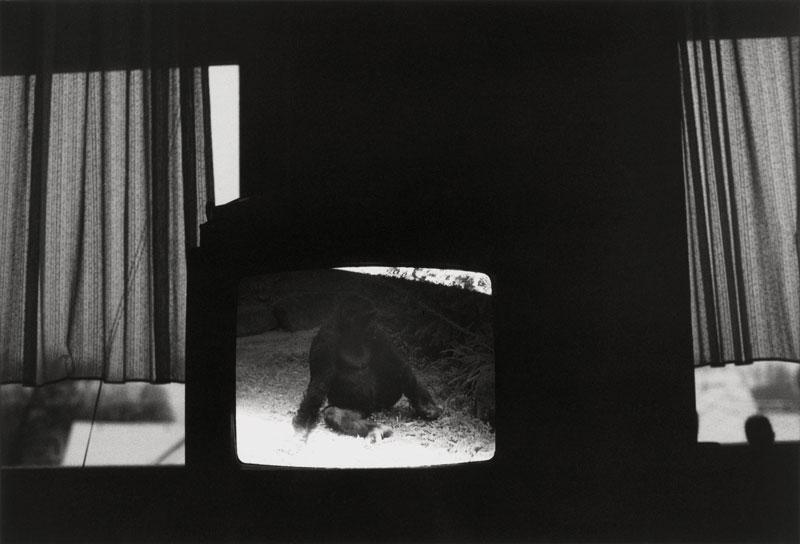Preisträgerin 2008: Stephanie Tiedemann | Serie: the idea of being someone else | o.T. 1 | © beim Fotografen
