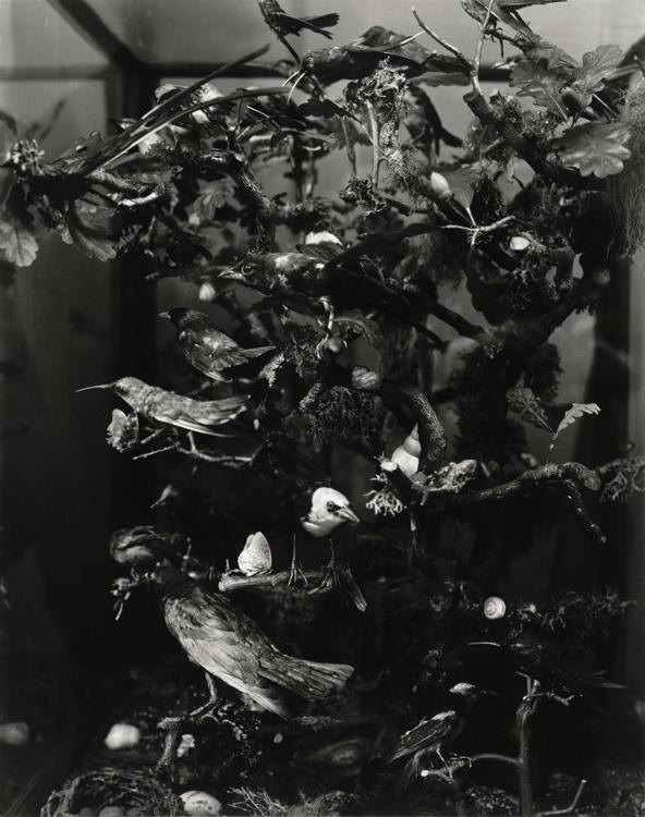 Preisträger 2014: Christian Retschlag | Kleines Archiv der Vögel | 2013 | Silbergelatine | © beim Fotografen