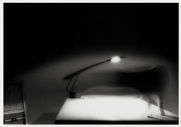 Jochen Könnecke | Serie: Katze auf Tisch, Catwalk | © beim Fotografen