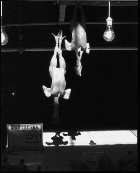 Wiebke K. Fölsch | Huhn | © beim Fotografen