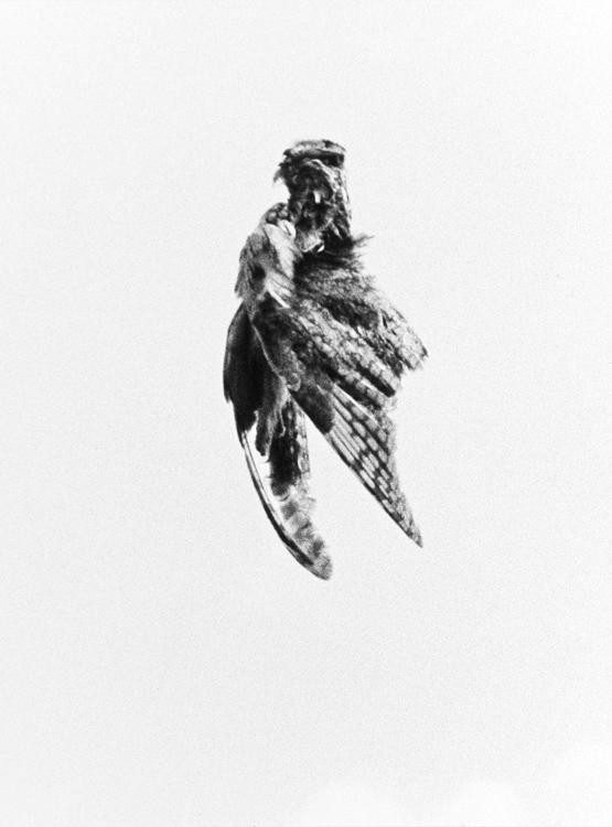 Felix Contzen | Don't let go 3 | 2013 | Handabzug Baryt | © beim Fotografen